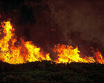 Bushfire spread