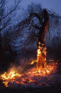 bushfire guidelines